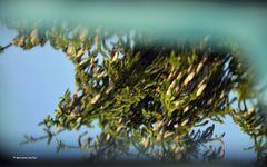 Spiegeltag: Smart Mirror - 1 -