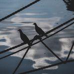 Spiegeltag - Wolkenspiegel mit Tauben 2