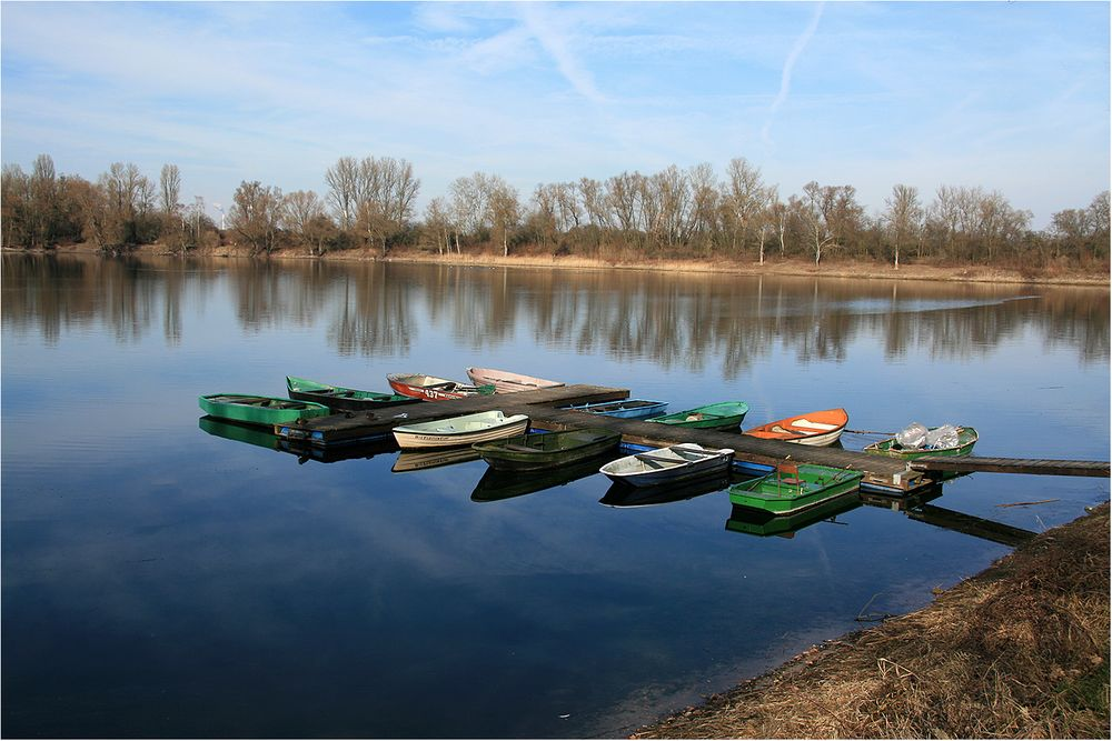 Spiegelung am Altrhein