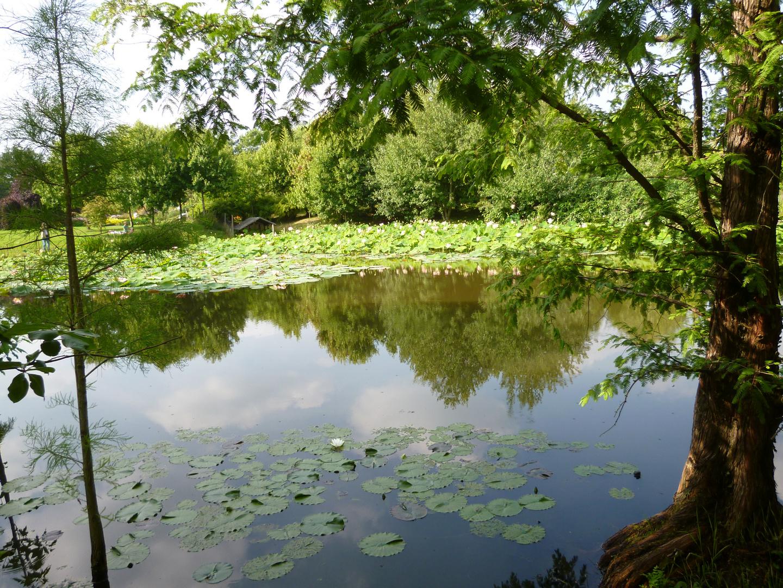 Spiegelung auf dem Lotussee vom Arboretum