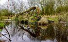 Spiegelung der Natur....Aufgenommen mit 4,7 MP vom Knipser.