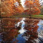 Spiegelung der Sumpfzypressen an einem schönen Novembertag