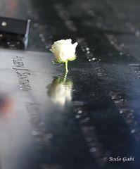 Spiegelung des Verlorenen