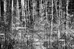 Spiegelung im Birkensee