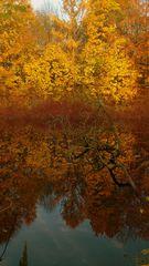 Spiegelung im Herbst