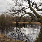 Spiegelung im Moor...