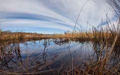 Spiegelung im Moor (fisheye)