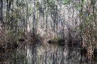 Spiegelung im Sumpf