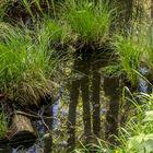Spiegelung im Wald