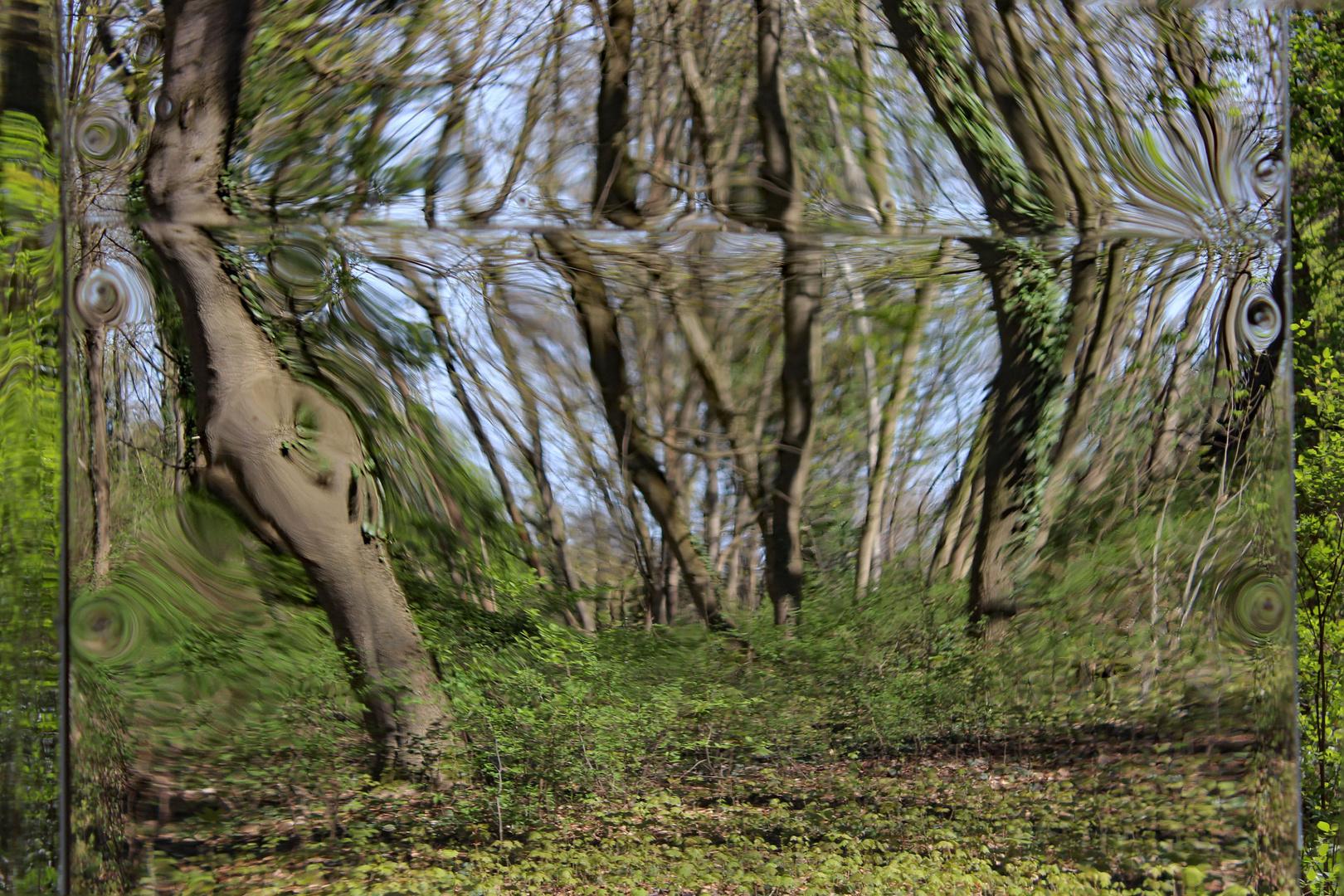 Spiegelung im Waldspiegel