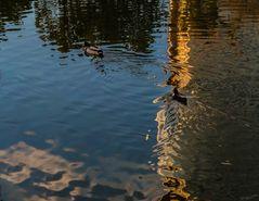 Spiegelung im Wasserpark