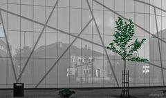 """Spiegelung in der """"Moderne"""" mit Baum"""