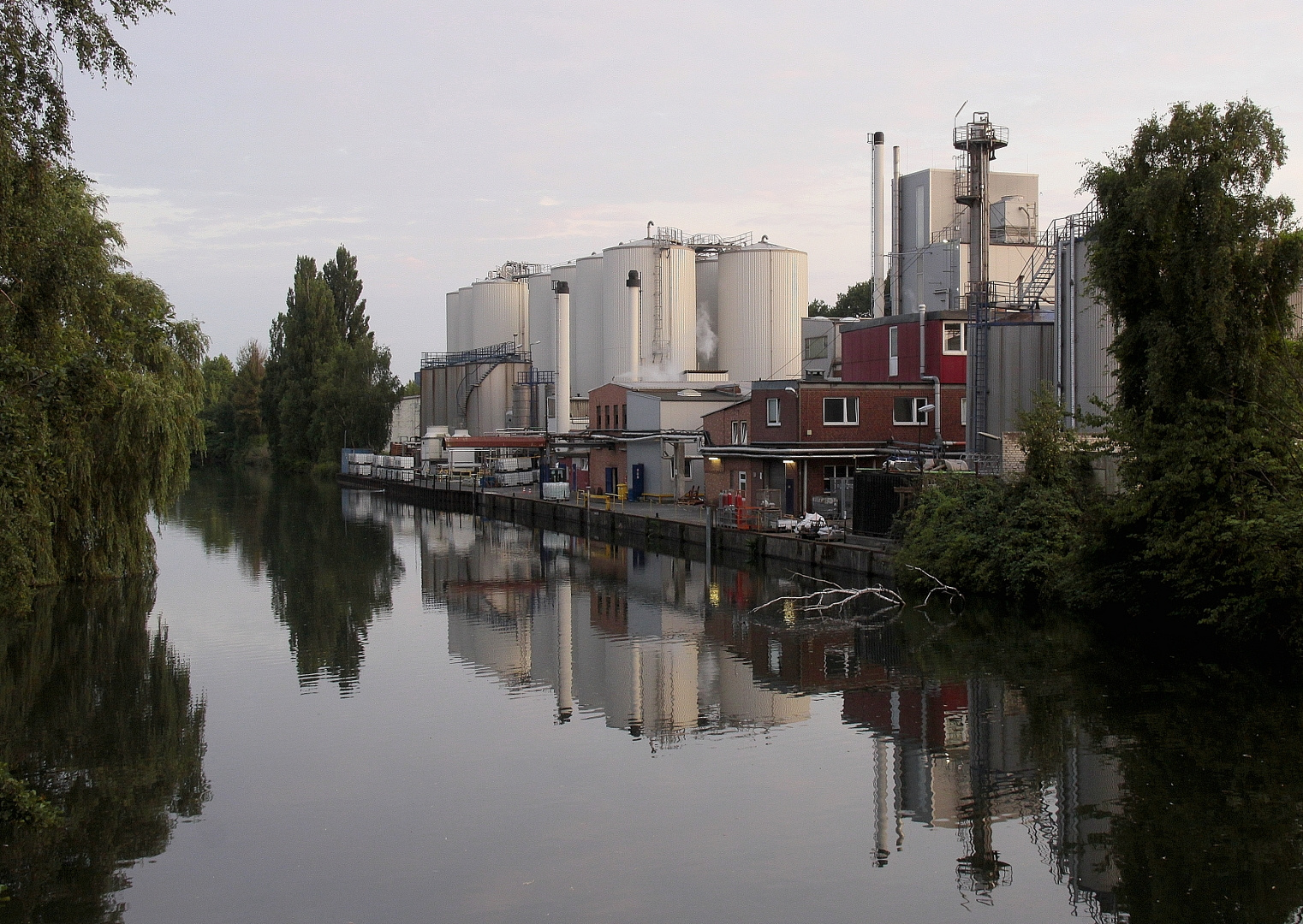 Spiegelung in seitlichem Nebenarm der Elbe