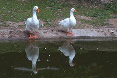 Spiegelung (Neuwieder Zoo)