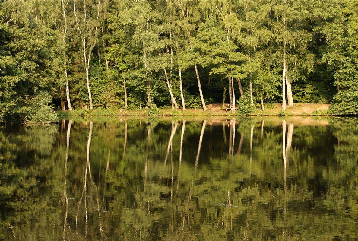 Spiegelungen an der Steinbach-Talsperre