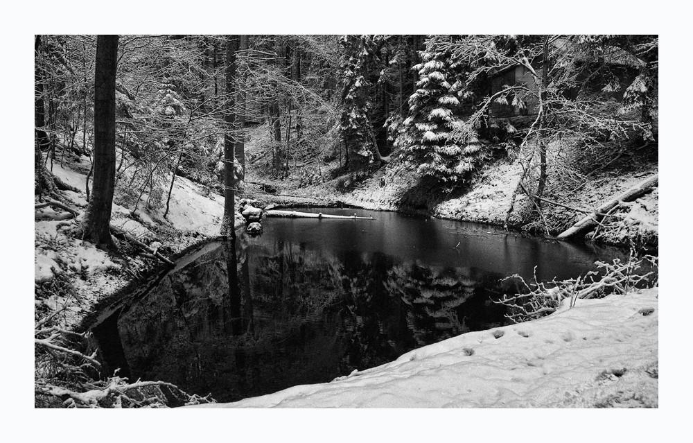 Spiegelungen im Wald