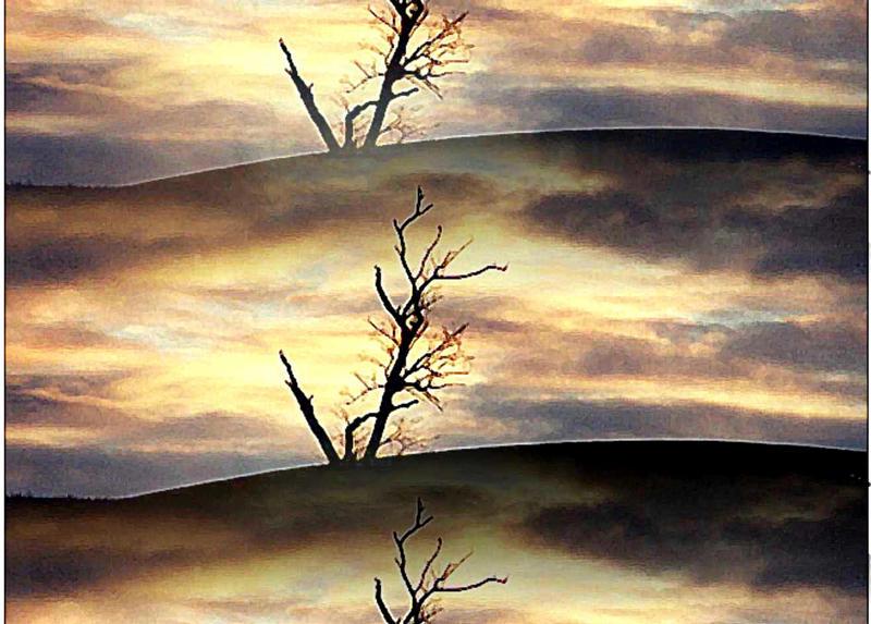 Spiegelungen mit einem toten Baum