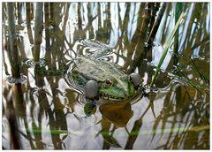 Spiegelungen mit Frosch