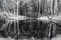 Spiegelwahn