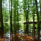 Spiegelzauberwald