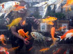 Spieglung im  Aquarium