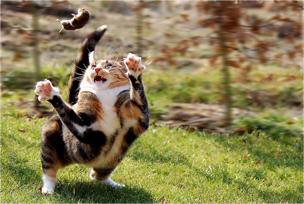 Spiele Katzen