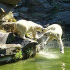 Spiel – Stunde bei den Eisbären