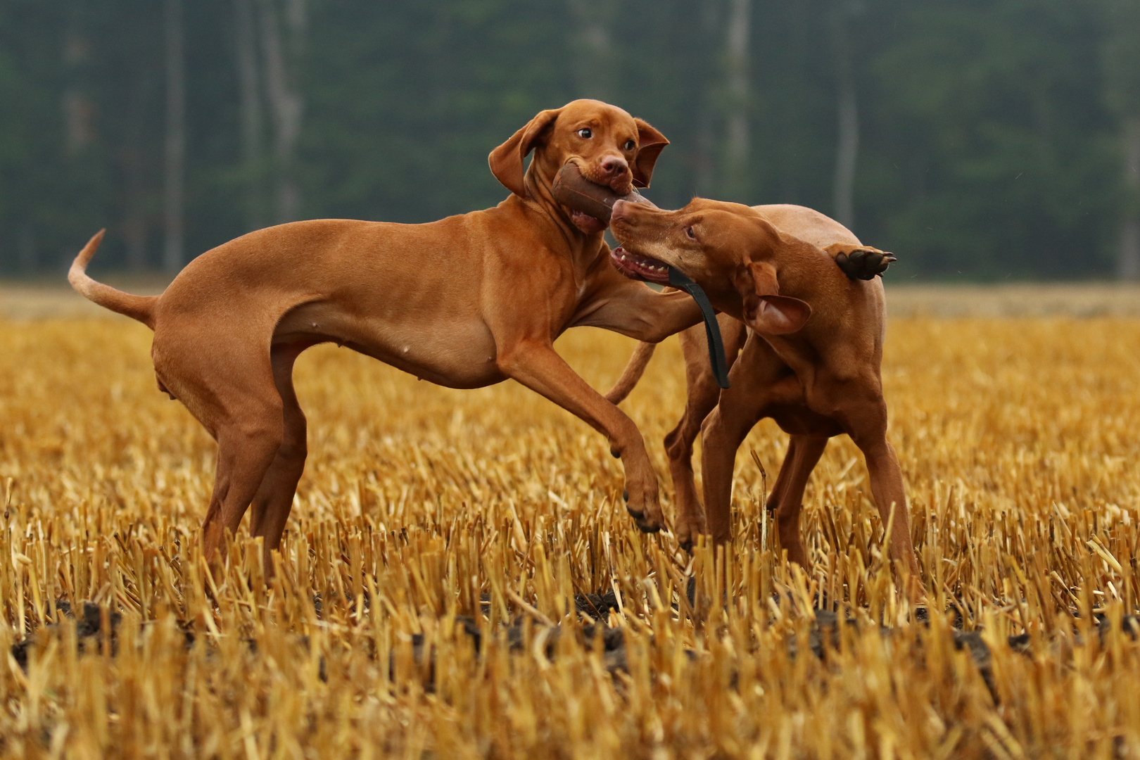 Spielen mit Freunden