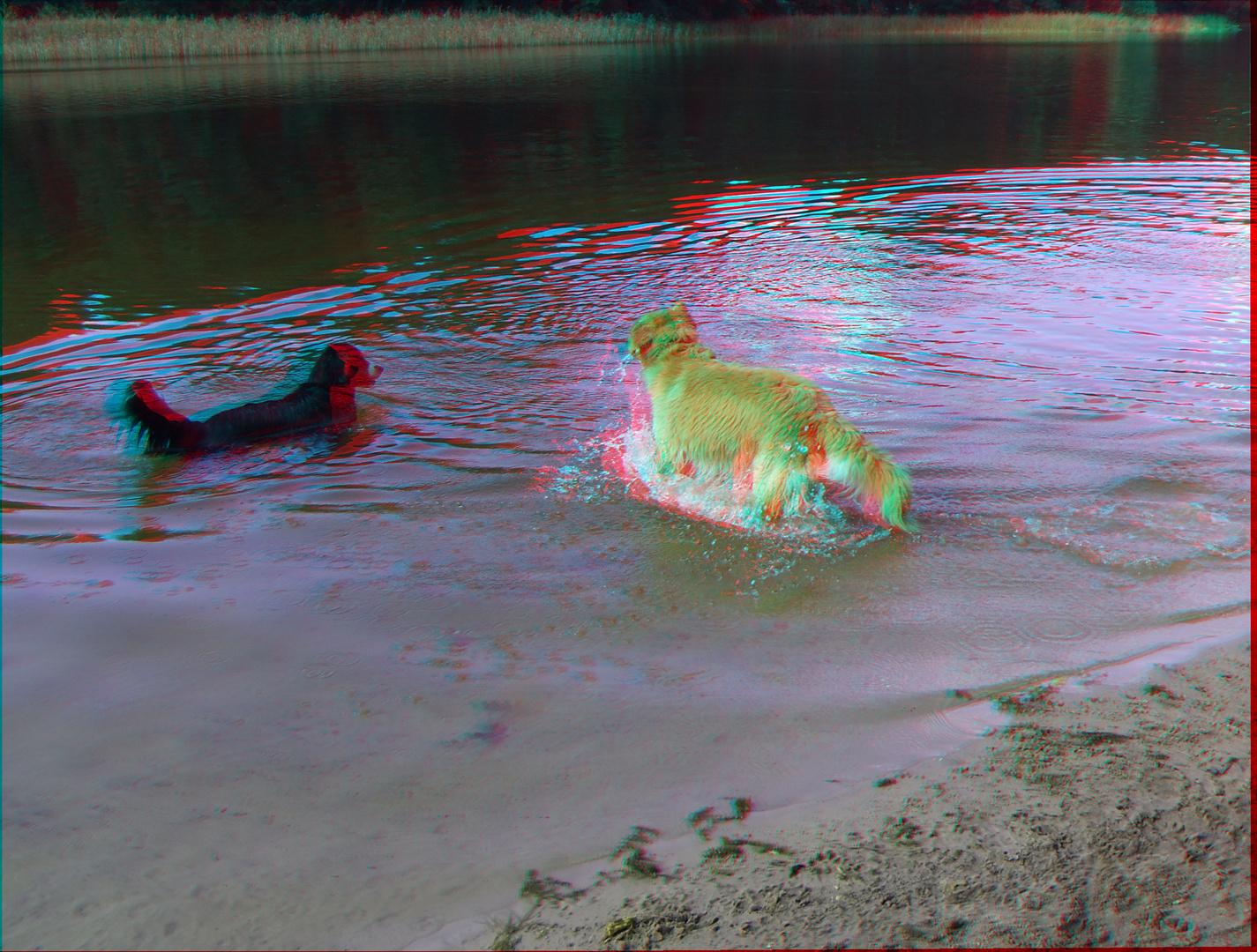 spielende Hund im Grunewaldsee