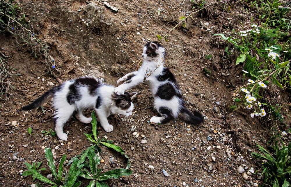 Spielende Katzenkinder!