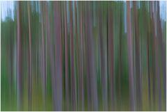 Spielerei im Wald
