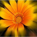 Spielerei mit einer Blume aus sonnigeren Tagen