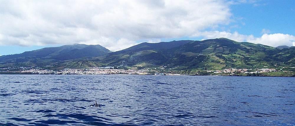 Spielplatz für Delphine