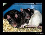 Spike und Sid die beiden wilden Rattenfüßchen ;-)