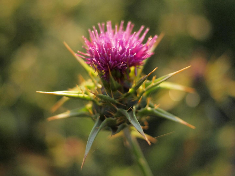 spiky beauty