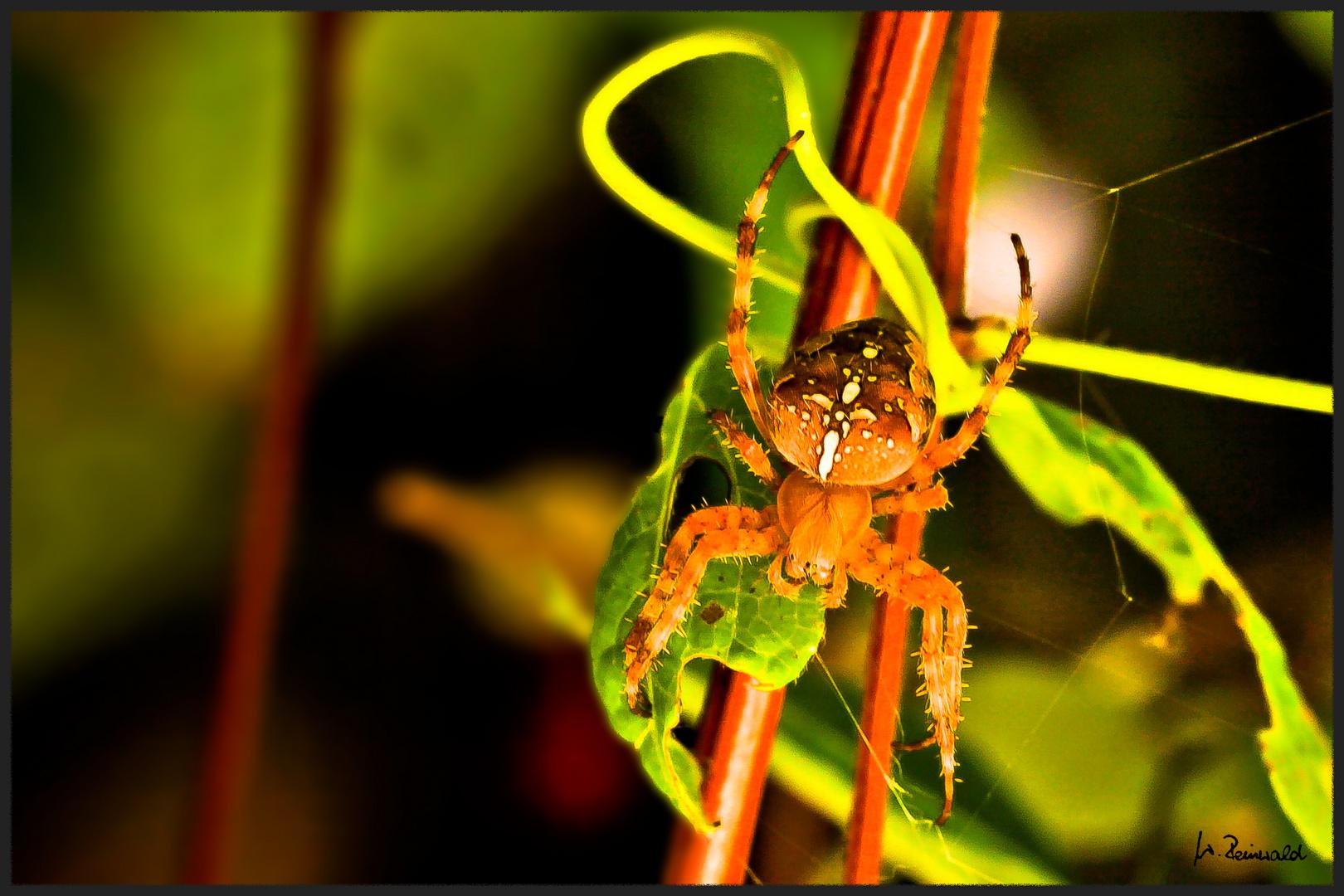 ~ Spinne 1 ~