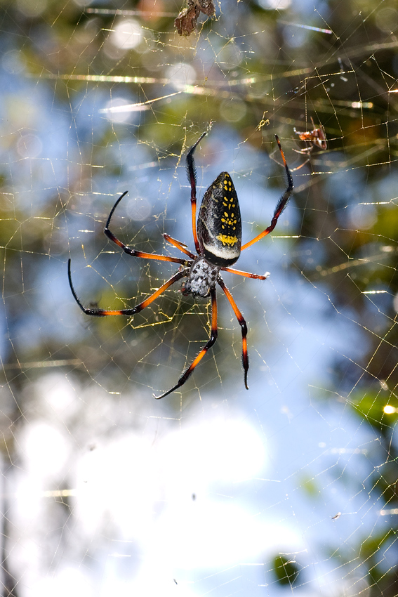 Spinne *2
