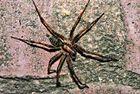Spinne 3