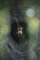 Spinne am Morgen bringt........
