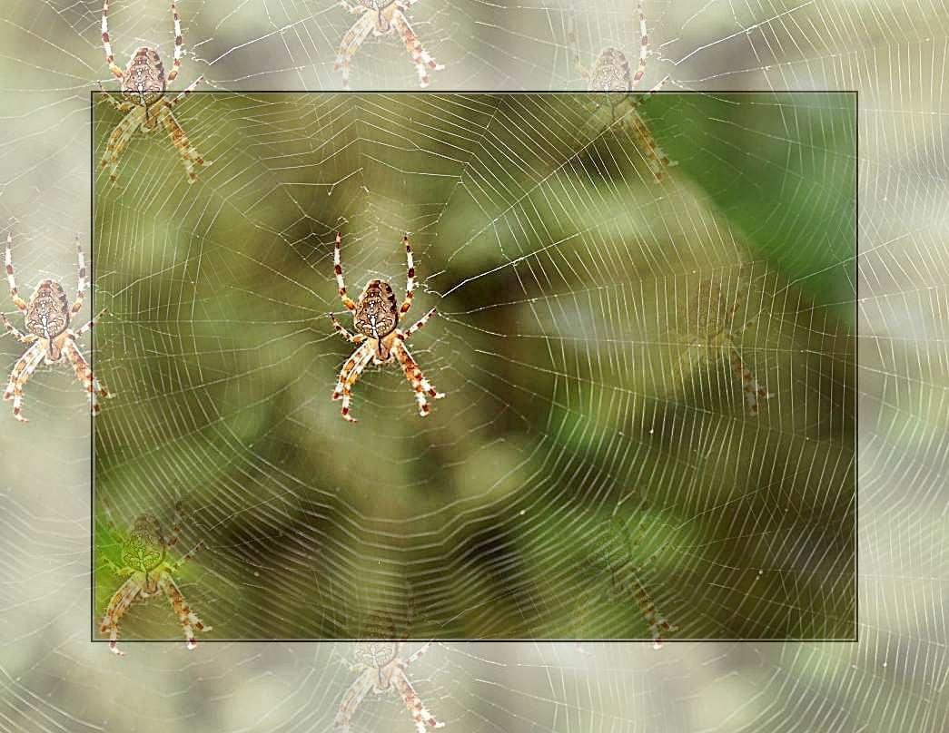 Spinne am Morgen bringt Kummer und Sorgen -