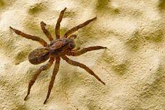 Spinne auf gelber Hauswand!