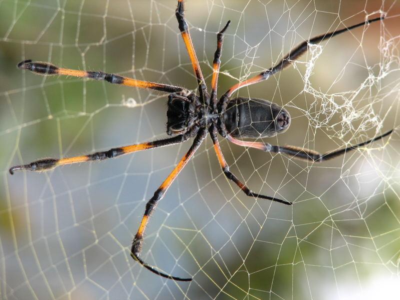 Riesige Spinnen