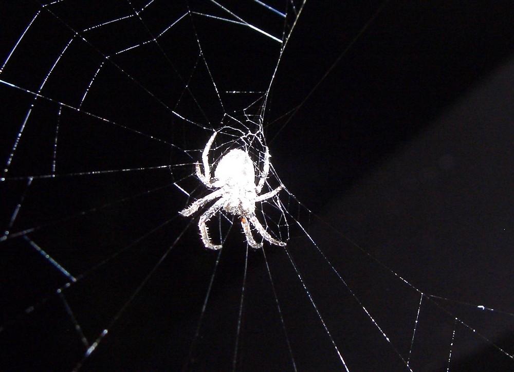 Spinne bei Dunkelheit