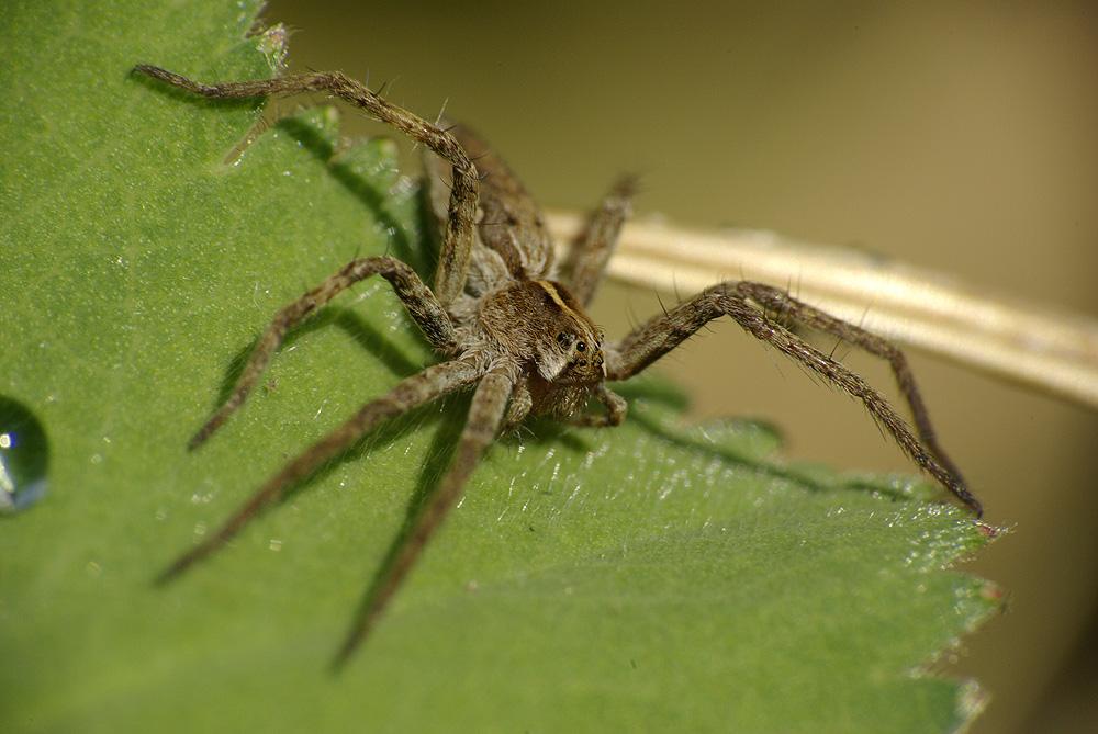 Spinne beim Sonnen