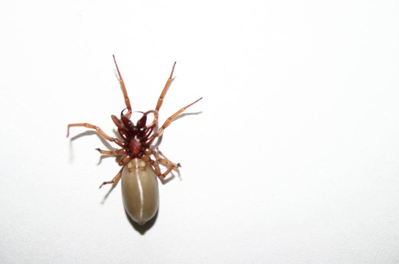 Spinne Giftig Deutschland