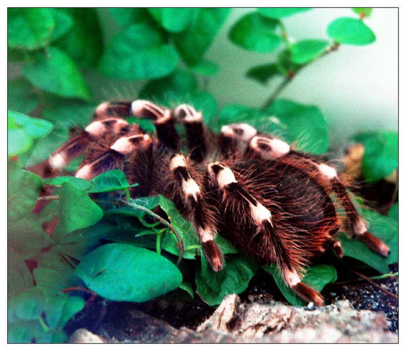 spinne hinter glas foto bild tiere wildlife spinnen. Black Bedroom Furniture Sets. Home Design Ideas