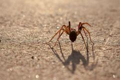 Spinne im Gegenlicht