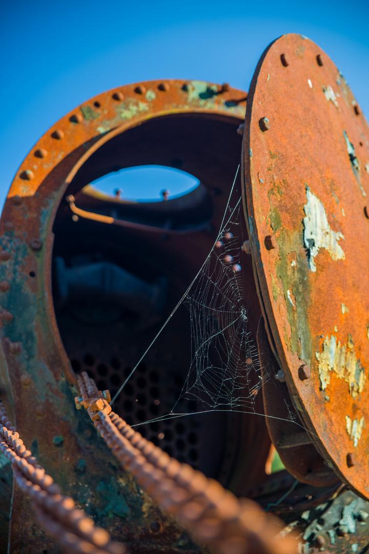 Spinne im Kessel