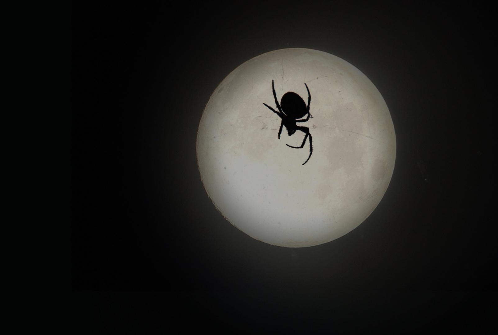Spinne im Mond - Halloween