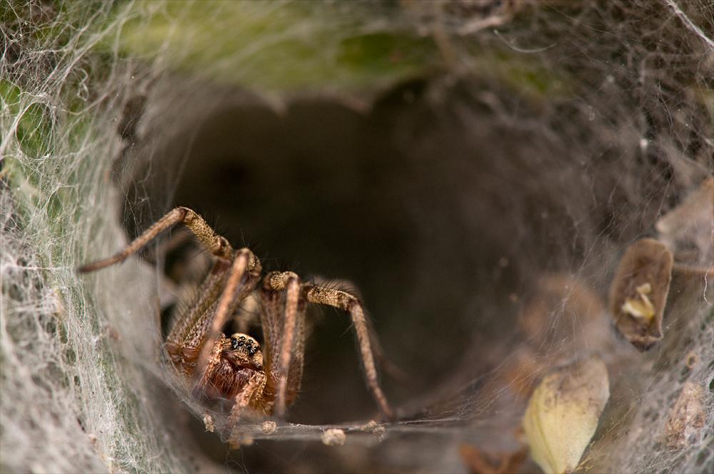 Spinne im Netztunnel